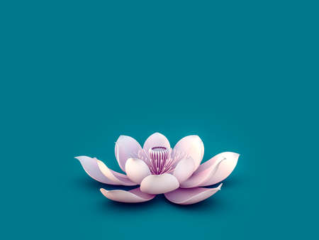 lotus flower: Lotus Flower Stock Photo