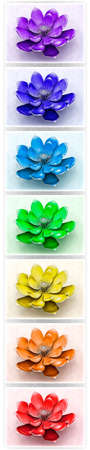 heart chakra red: Lotus Flowers With Chakra Colors