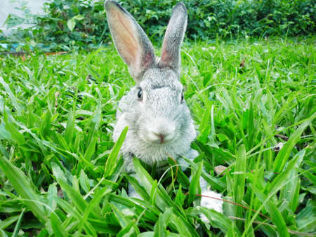 Cute rabbit in green grass  Close-up,focus on Head