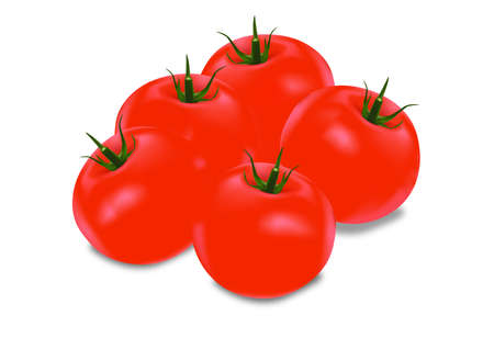 Tomato fresh  Illustration