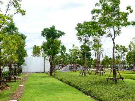 Photograph landscape of line line plant and tree garden