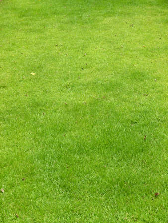Green grass field landscaping background Stock Photo
