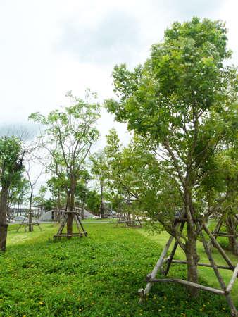Landscape tree garden