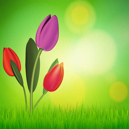 Vector natural green background with tulip flower and grass. vector illustration Illustration