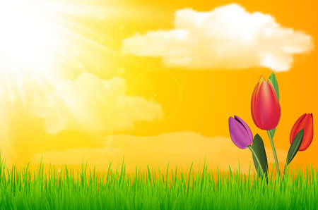 Vector natural green background with sun tulip flower and grass. vector illustration