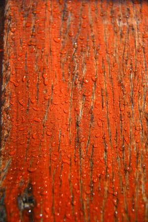 cesspool: water drop on wood Stock Photo