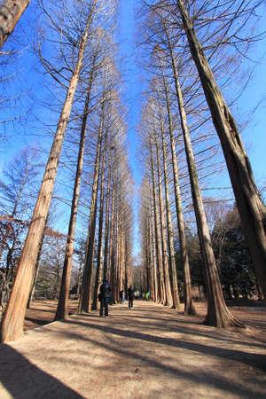 higth tree Stock Photo - 9029516