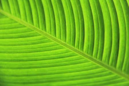 leaf green Фото со стока