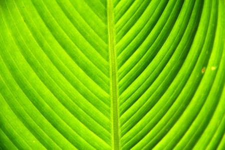 leaf green photo