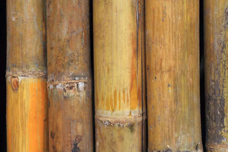 jointed: Jointed bamboo Stock Photo