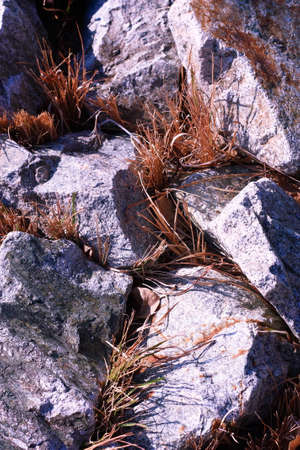 rock stone  with gray grass photo