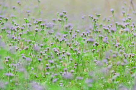 purple green little flower in the gerden  photo