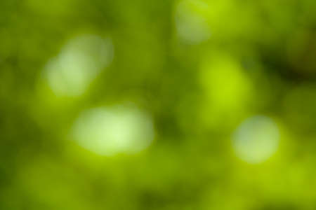 grassplot: green laef background abstract