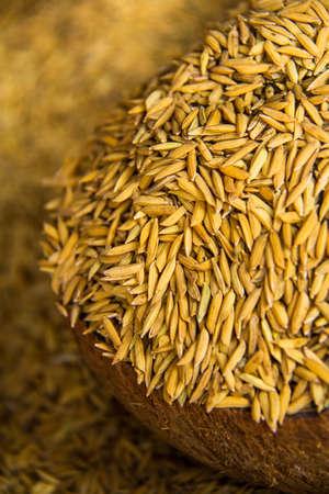 rice brown grain Фото со стока