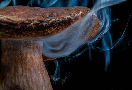 Ð¡lose-up mushroom in smoke. Isolated on black background. Wonderland mushroom. magic mushroom. Fairy mushroom. Negative space. Halloween. Reklamní fotografie