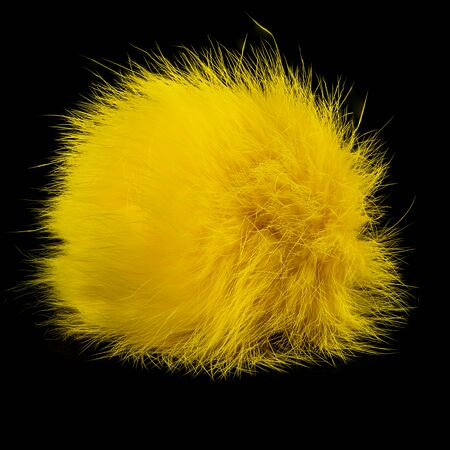 Closeup of yellow rabbit fur pompom isolated on black background