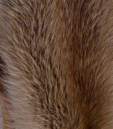 Fox fur. Texture closeup. Backdrop.