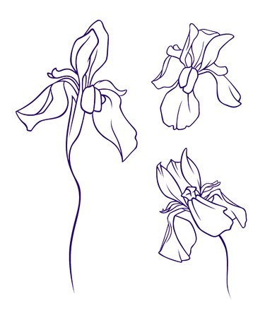 A set of iris flowers
