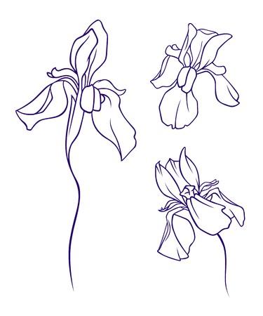 A set of iris flowers