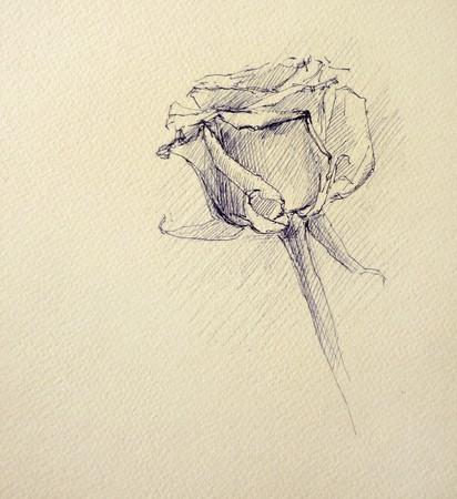 pensil: A drawn sketch of a rose