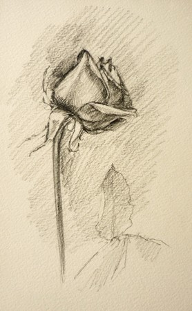 A raster pensil drawn rose photo