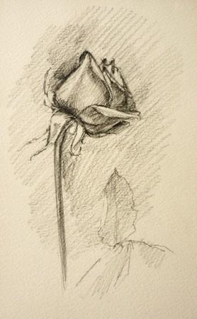 pensil: A raster pensil drawn rose