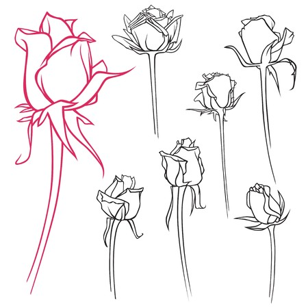 A set of vector contour roses Stock Photo - 7927071