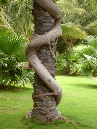 Two intertwined trees shown in botanical garden