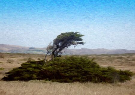 painting of a Tree on a Windy Coast in oil technique made on a computer Stock Photo - 4298135