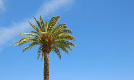 Sunlit palm tree with blue sky background and copy space to the right. photo