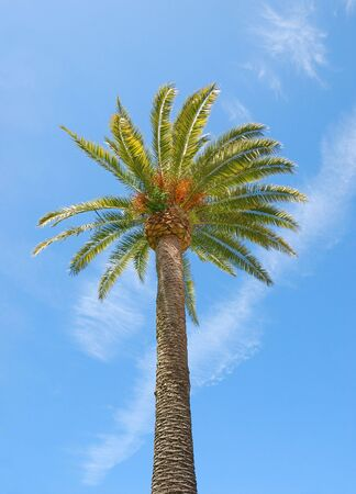 Sunlit palm tree with blue sky background. photo
