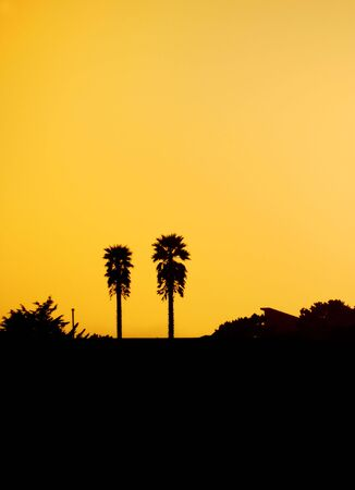 Two palm tree silhouettes against orange sunset sky on California coast. photo