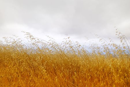 Dry grass with cloudy stormy sky in the background. Stock Photo