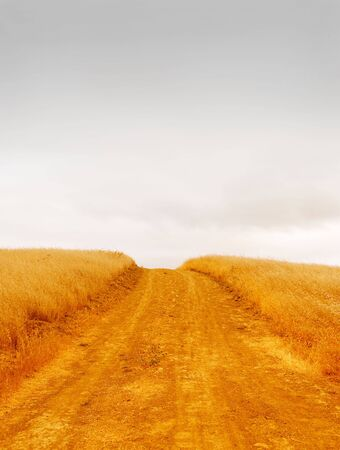 Empty rural road with dry grass on the sides dissappearing into the stormy sky. Stock Photo