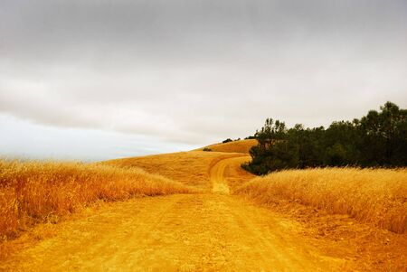 Rural road with dry grass on the sides disappearing into the stormy sky. Stock Photo