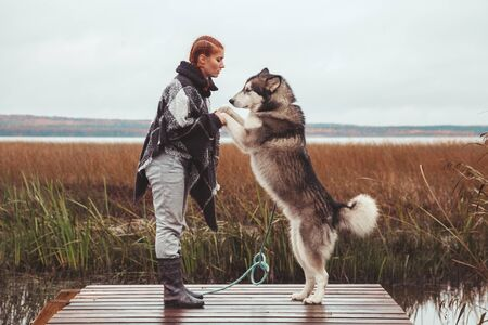 redhaired caucasian woman owner with her malamute grey big dog near the lake