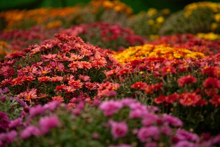 beautiful fall flowers. Vintage autumn landscape photo.