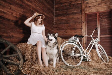 adorable plus size caucasian girl with red hair in a white summer dress poses with her big dog Malamute best friend on a haystack in a barn