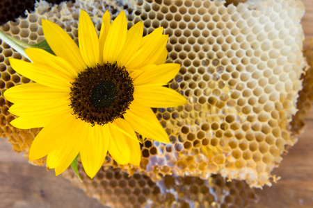 honey comb: beautiful honey comb with a flower close-up