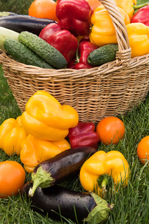 Set of vegetables on a background of green grass