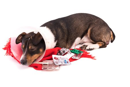 sick dog with medicine on a white background