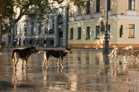 a pack of stray dogs in the city Stock Photo
