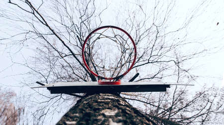 Basketball ring on a tree, red color with a net. View from the bottom. Background