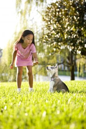 obedience: Asia y bastante joven formación Alaskan Klee Kai cachorro a sentarse