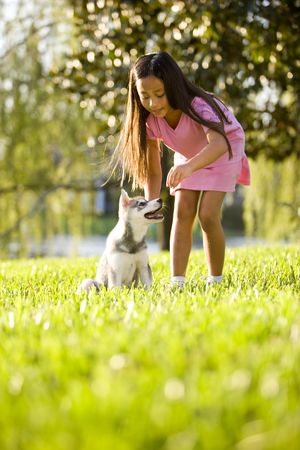 Pretty young Asian girl training Alaskan Klee Kai puppy to sit