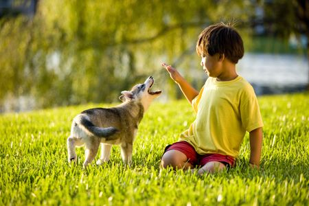 Young Asian boy playing with Alaskan Klee Kai puppy sitting on grass photo