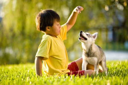 feed up: Young Asian boy playing with Alaskan Klee Kai puppy sitting on grass