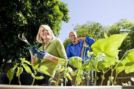 tending: Mid-adult couple working on vegetable garden together in backyard