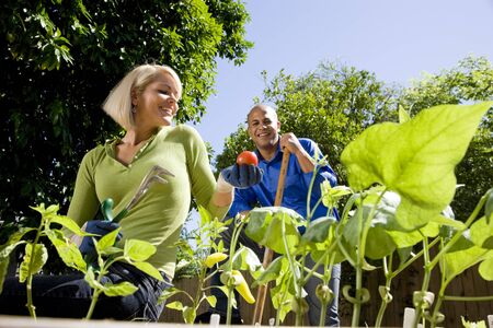 woman gardening: Mid-adult couple working on vegetable garden together in backyard