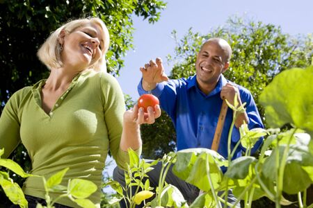 planter: Mid-adult couple working on vegetable garden together in backyard